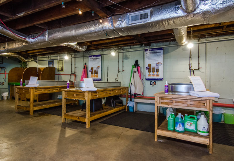 Wags and whiskers self serve dog wash and holistic pet food photo east nashville solutioingenieria Image collections